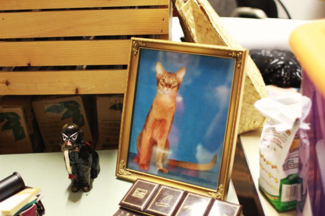cat-picture