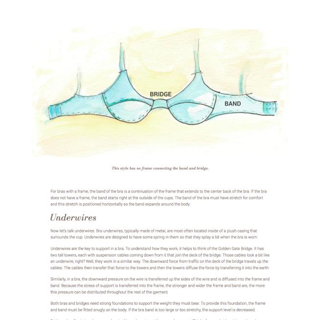 bra-anatomy